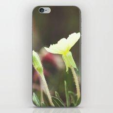 Gentle Landscape iPhone & iPod Skin