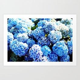 Blue flowers all summer  Art Print