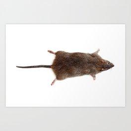 Flat Rat Rug Art Print