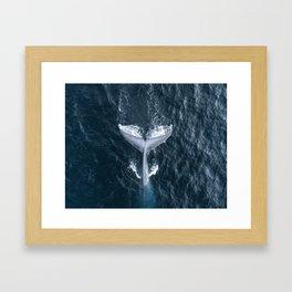 Whale Tail Framed Art Print