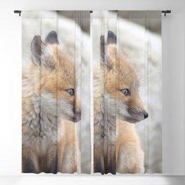 Watercolor Fox, Red Fox 61, Union Reservoir, Boulder Blackout Curtain