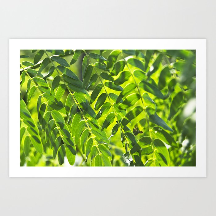 Sunny Leaves Art Print