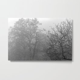 Black and white autumnal naked trees surrounded by fog Metal Print