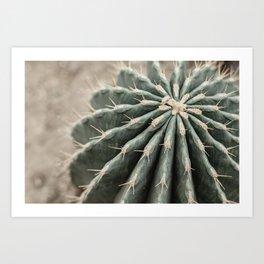 Cactus Dreams | Modern Botanical Photography | Nature Art Print