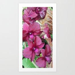 Dark purple orchid Art Print