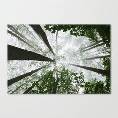Stop and dream Canvas Print