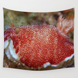Munching red nudibranch Wall Tapestry