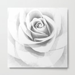 Grey Rose Metal Print