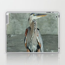 Great Blue Heron Photography Print Laptop & iPad Skin