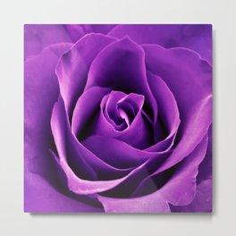 Purple Passion Rose Metal Print