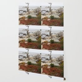 Dead Cypress At Pebble Beach Wallpaper