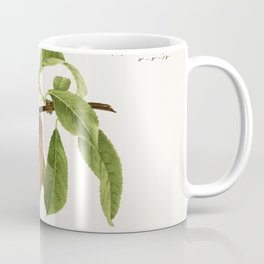Peach twig (Prunus Persica) (1918) by Royal Charles Steadman Coffee Mug