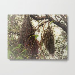 'Ohi'a Aerial Roots Metal Print