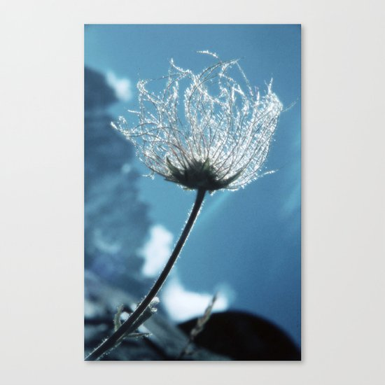 Flower shining in the light snowy mountains #1 Canvas Print