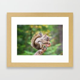 Squirrel and the Mushroom Framed Art Print