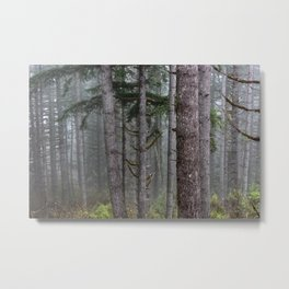 Foggy Forest Wanderlust Adventure II - 115/365 Nature Photography Metal Print