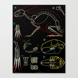 Paul Sougy: The Rabbit, 1950s (proceeds benefit The Nature Conservancy) Canvas Print
