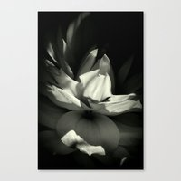 orchid Canvas Prints featuring Orchid by BavosiPhotoArt