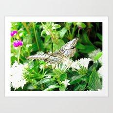 Butterfly - 2 Art Print