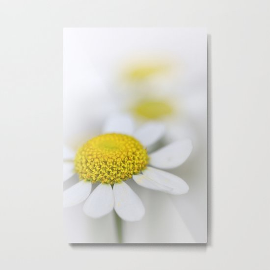 Matricaria (German chamomile) Metal Print