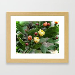 Cactus with flower Framed Art Print