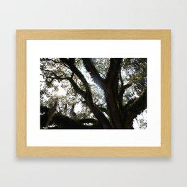 Sunlight Through The Oak Framed Art Print
