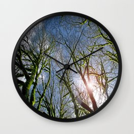 RAIN FOREST MAPLES REACHING FOR THE SKY Wall Clock