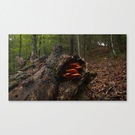 Newt Canvas Print