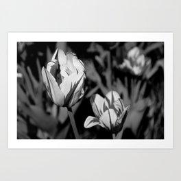 Flowers 2 Art Print