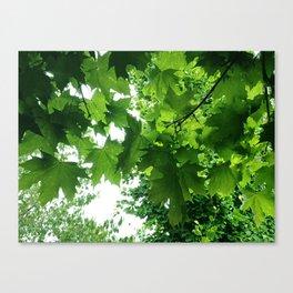 Leafy Green Canvas Print