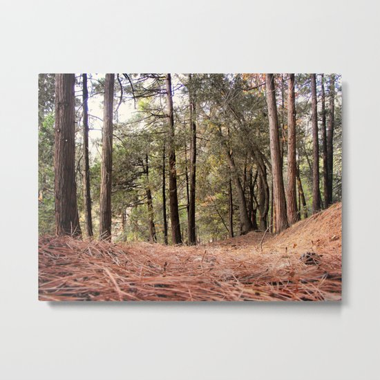 From the Forest Floor Metal Print