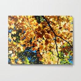 Fall. Metal Print