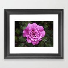 Rose, dear Framed Art Print