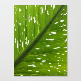 Spotted with White: Leaf Canvas Print
