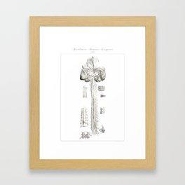 Human Anatomy Art Print BRAIN SPINAL CORD Vintage Anatomy, doctor medical art, Antique Book Plate, M Framed Art Print