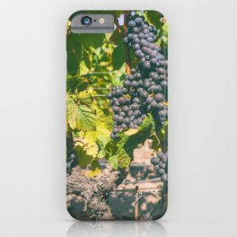 Grapevines 2 iPhone Case