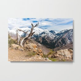 Old mountain tree Metal Print