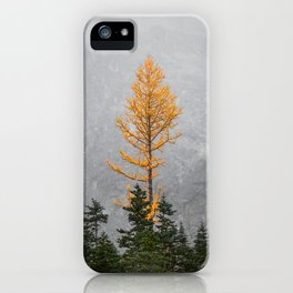 The Beauty of Larches iPhone Case
