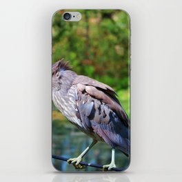 Immature Night Heron iPhone Skin