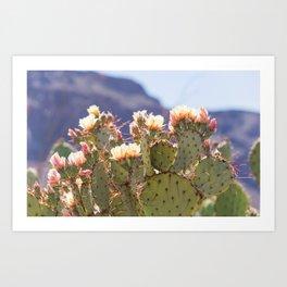 Prickly Pear Cactus Blooms, II Art Print