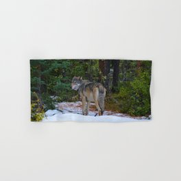 Wolf in Jasper National Park Hand & Bath Towel