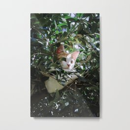 Monchique - The Wild Cat Metal Print