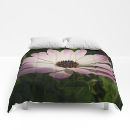 Side View of A Pink and White Osteospermum Comforters