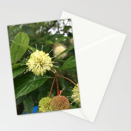 Naturals by Nikki - Seed Spikes Stationery Cards