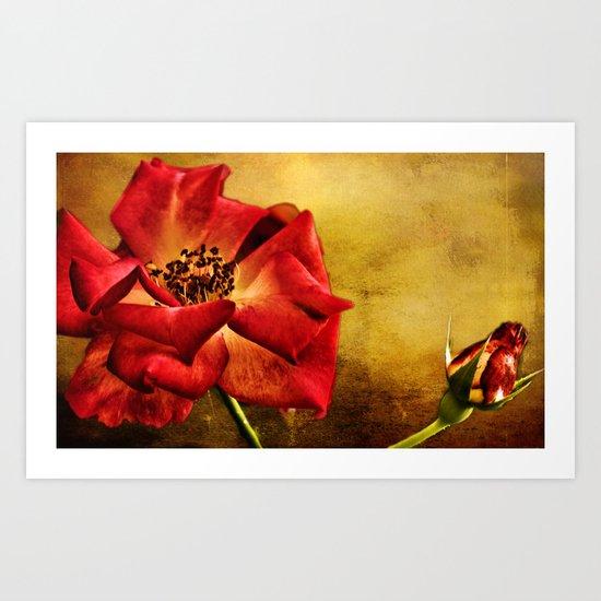 The Scarlet Flower (RED ROSE) Art Print