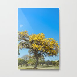 Flowering tree, Tabebuia aurea, Oahu, Hawaii | Nature Landscape Travel Photography | Wall Art Decor  Metal Print