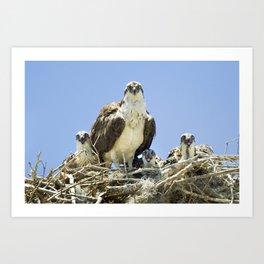 Osprey Family Portrait Art Print