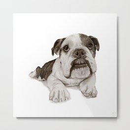 A Bulldog Puppy :: Brindle  Metal Print