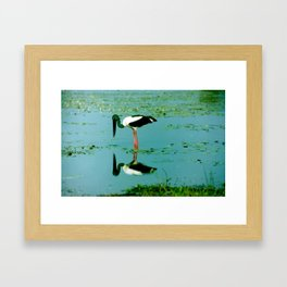 Jabiru stork reflecting on life Framed Art Print