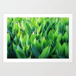 Green leaves so beautiful. Art Print